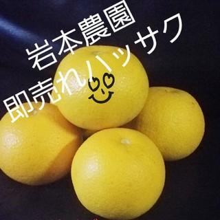ハッサク十キロ サイズミックス(フルーツ)