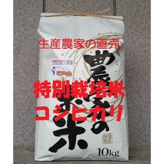 ★新米★[白米]特別栽培米コシヒカリ10kg有機肥料減農薬栽培(米/穀物)