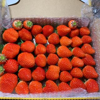 朝採れさがほのか苺730g●いちごイチゴ