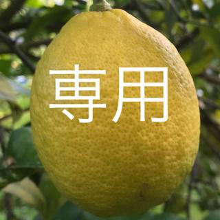 ネーブルオレンジ  5キロ