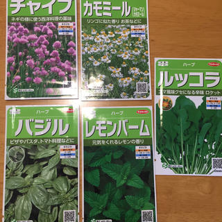 野菜の種 ハーブの種 よりどり6種類(野菜)