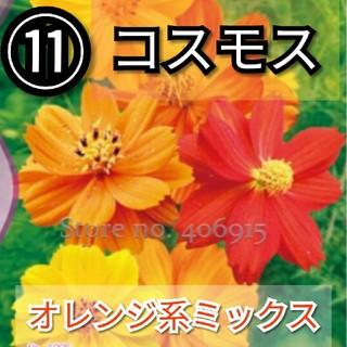 【コスモス⑪】オレンジ系ミックスカラー 種子30粒(その他)