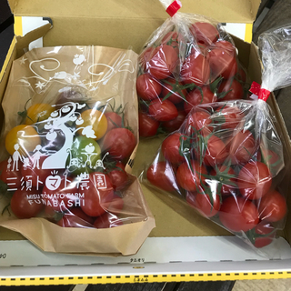 <お試し用>ミニトマトセット(カラフル・ミニトマモモちゃん・アイコ)900g(野菜)