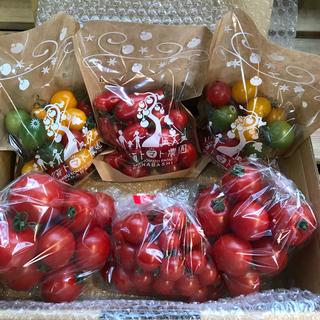 ミニトマトセット1.6kg(ミニトマモモちゃん・カラフルトマト・アイコ)(野菜)