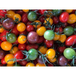 天然水様専用   トマトの宝石箱1.8kg(野菜)