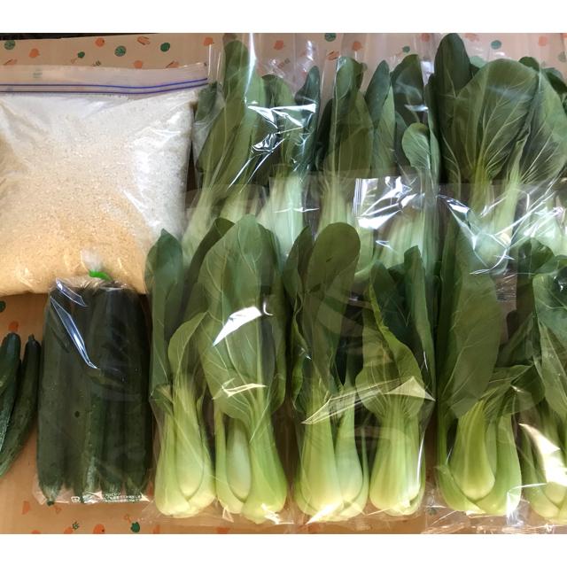 お米、お野菜セット 食品/飲料/酒の食品(野菜)の商品写真
