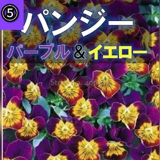 【パンジー、ビオラ】⑤パープル&イエロー 種子約12粒前後!(その他)