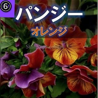 【パンジー、ビオラ】⑥オレンジ 種子約12粒前後!(その他)
