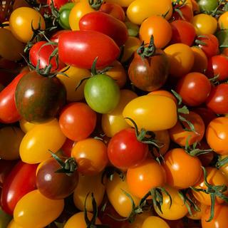 カラートマトミックス(野菜)