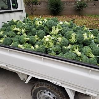 ブロッコリー(野菜)