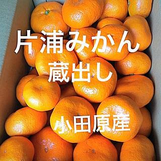 片浦みかん 蔵出し 小田原産 約5㎏ 産地直送   送料込み(フルーツ)