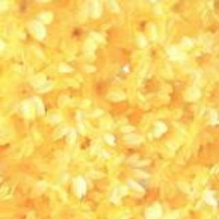 人気のスターフラワー ドライフラワー 花材 お色はモーニングイエロー(ドライフラワー)