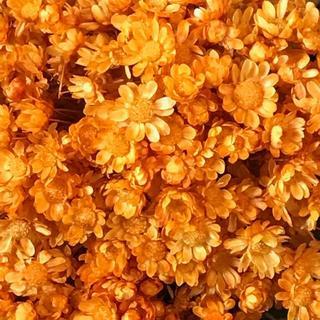 人気のスターフラワー ドライフラワー 花材 お色はオレンジ(ドライフラワー)