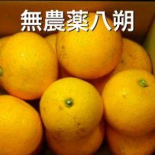 【有田の八朔】《無農薬》 はっさく ハッサク★3kg(フルーツ)