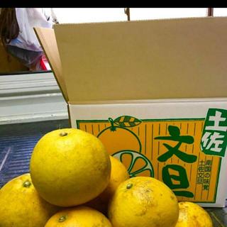 【訳あり品】数量限定 土佐文旦約10kg x 4(フルーツ)