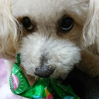アウディ(AUDI)のSchokolate様☆専用 (日用品/生活雑貨)