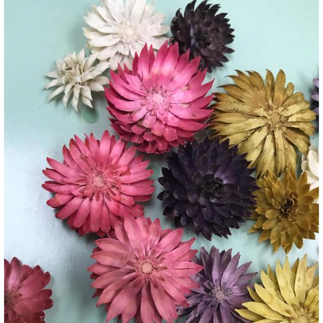 チーゼルフラワー  ピンクミックス ハンドメイドのフラワー/ガーデン(ドライフラワー)の商品写真