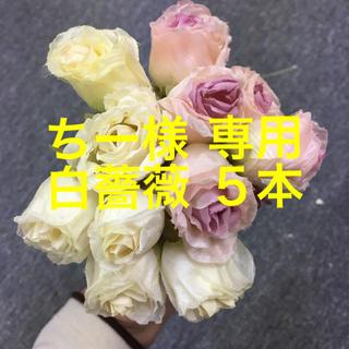ちー様 専用出品 白薔薇 造花(その他)