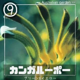 【カンガルーポー⑨】グリーン&イエロー 種子10粒 アニゴザントス(その他)