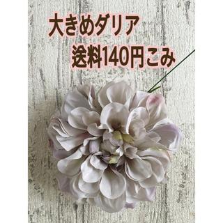 181☆高品質ダリア グレーパープル(その他)