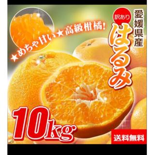 高級柑橘系❣️愛媛県の訳ありはるみみかん10kg追加可能(フルーツ)