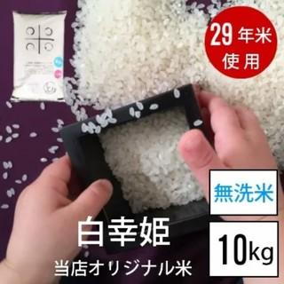 無洗米10kg(米/穀物)