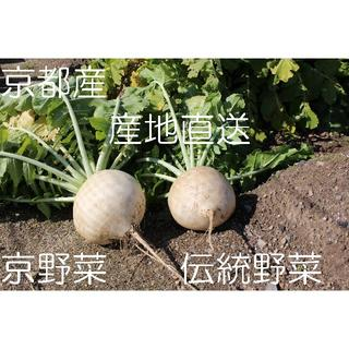 京都産 聖護院大根 80サイズ(野菜)