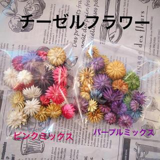 チーゼルフラワー 1袋350円!!(ドライフラワー)