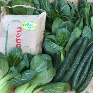 コシヒカリ、チンゲン菜、キュウリ(野菜)