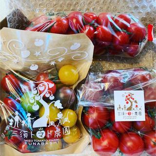 <お試し用>フルティカ&ミニトマトセット(アイコ・カラフル)(野菜)