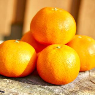 【現品限り】【訳あり】希少柑橘 つののぞみ(フルーツ)