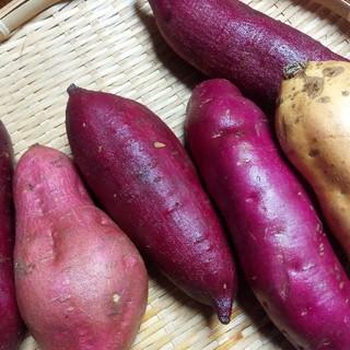 🉐Sale さつまいもバラエティーセット3kg【農薬、化学肥料不使用】(野菜)