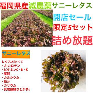限定2セット‼️減農薬サニーレタス+無農薬 大根+キャベツ‼️3点セット(野菜)