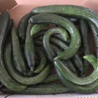 摘果キュウリ(野菜)