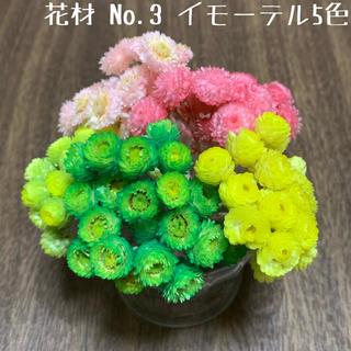花材 No.3 イモーテル5色セット(ドライフラワー)