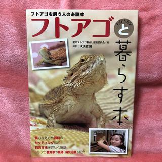 フトアゴヒゲトカゲと暮らす本(爬虫類/両生類用品)