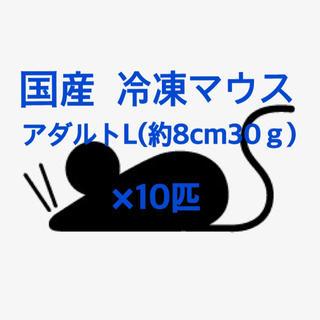 国産冷凍アダルトマウスL☆10匹(爬虫類/両生類用品)