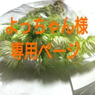 よっちゃん様専用ページ(ドライフラワー)
