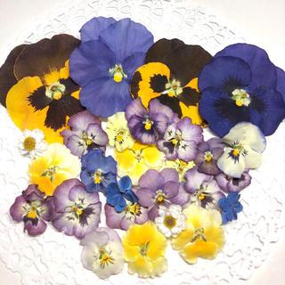 ✿ ドライフラワー 花材 ✿ ビオラ 紫陽花 花かんざし(各種パーツ)