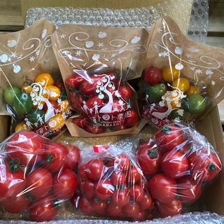 〈関東限定〉ミニトマト&フルティカセット1.8kg(野菜)
