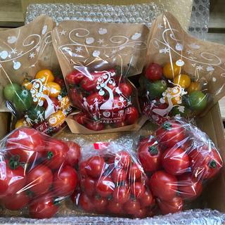 〈関東限定〉フルティカ&ミニトマトセット1.8kg(野菜)