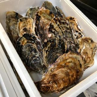 三重県桃取産 殻付き牡蠣 桃こまち 30個