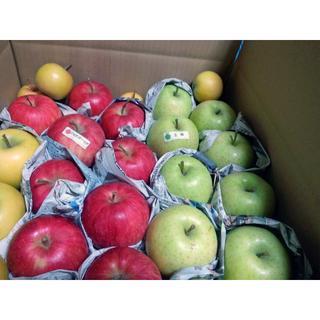 青森りんご 食べ比べ!10kg☆家庭用☆送料込(地域別追加金有 (フルーツ)
