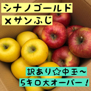 訳あり*シナノゴールド ×サンふじりんご 中玉〜5キロ大オーバー(フルーツ)
