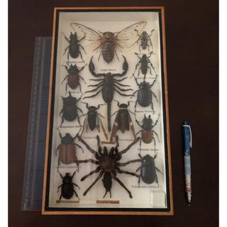 虫の標本(虫類)