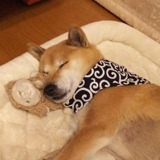 まるさん専用☆犬用 手作りバンダナ 唐草模様 ☆紺色一点(リード/首輪)