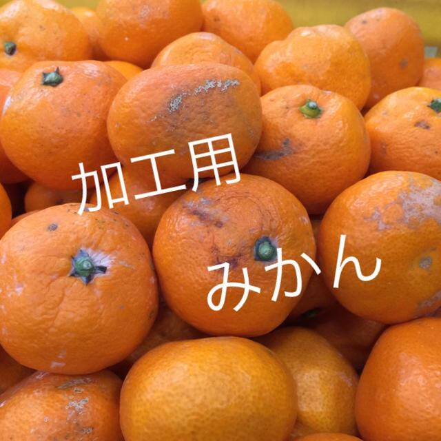 紀州 蔵出し みかん 訳あり 食品/飲料/酒の食品(フルーツ)の商品写真