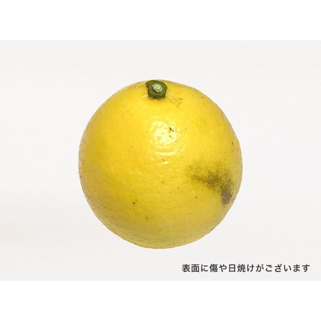 早生日向夏12個 食品/飲料/酒の食品(フルーツ)の商品写真