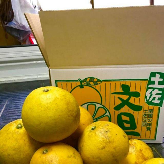 【訳あり品】数量限定 土佐文旦約10kg 食品/飲料/酒の食品(フルーツ)の商品写真
