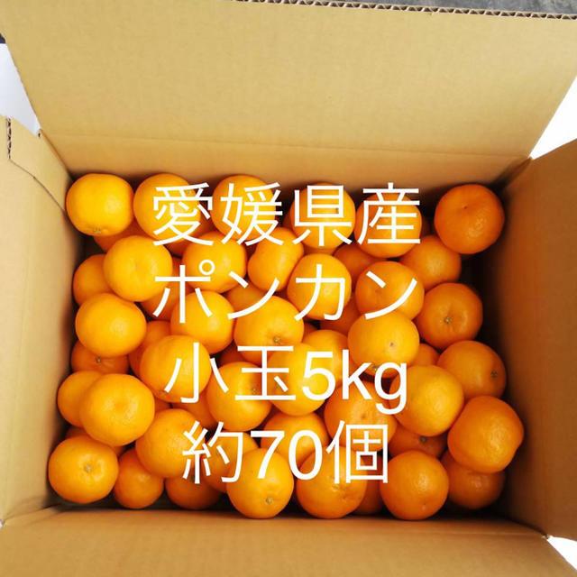 愛媛県産小玉ポンカン5kgご家庭用 食品/飲料/酒の食品(フルーツ)の商品写真